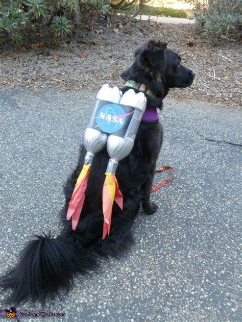 rocketdog dog halloween costumes diy pet halloween