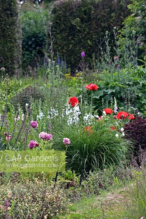 Bluebell Cottage Gardens Dutton Warrington by Gap Gardens Wildflowers And Papaver Orientalis At