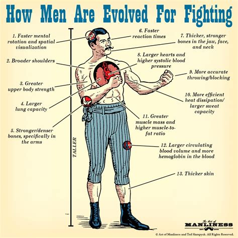 How To Fight how are evolved for fighting the of manliness