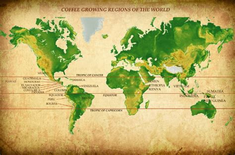 Coffee ? Trivia & History   Green Groundswell
