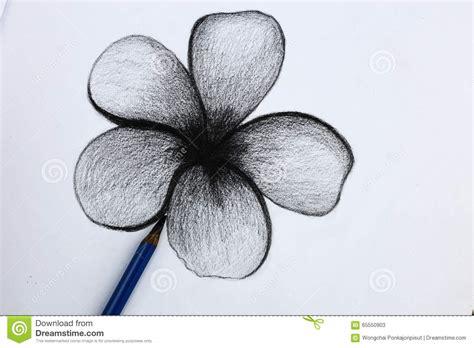 fiori disegnati a matita disegno a matita i dei fiori immagine stock immagine