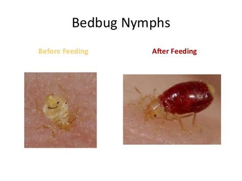 can bed bugs jump bedbugs the hidden enemy