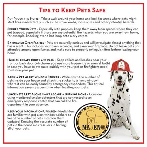 9 Tips On Keeping Your Outside Pet Safe From The Cold by Pin By Tiger Tigre G 233 Ant On Gt Pet Maven