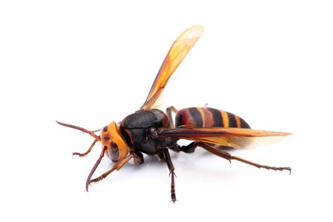 wespen im garten vertreiben wespennest was tun umgang mit wespen haushaltsmitteln zum