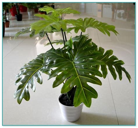 cheap indoor plants house plants for sale cheap