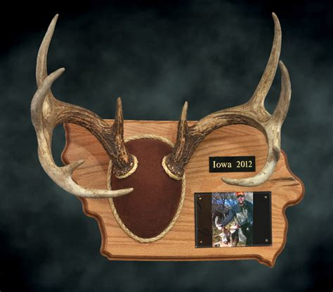 antler plaque template 28 images 4 best images of