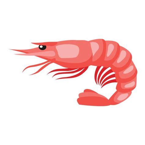 shrimp clip royalty free prawn clip vector images illustrations