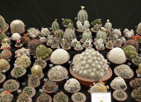piante grasse in giardino piante grasse piante grasse piante grasse