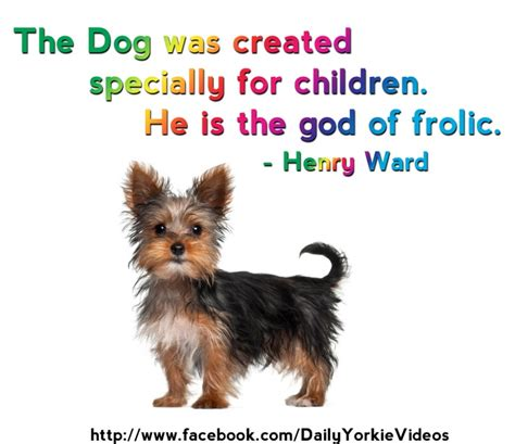 yorkie quotes 24 best yorkie quotes images on