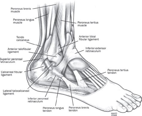 foot diagnosis diagram broken foot not in the plan time to be flexiable and