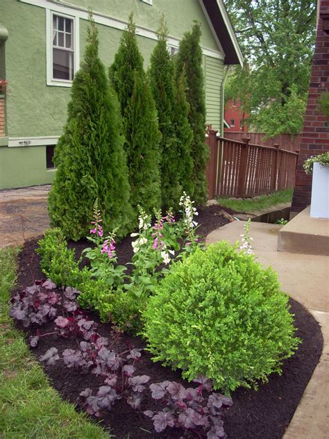 mixed screen plants layering evergreens and flowering shrubs will create visual interest year