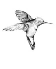 hummingbird drawing original hummingbird drawing