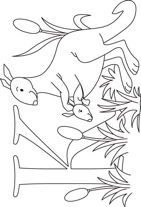 k kangaroo coloring page free coloring pages of k is for kangaroo