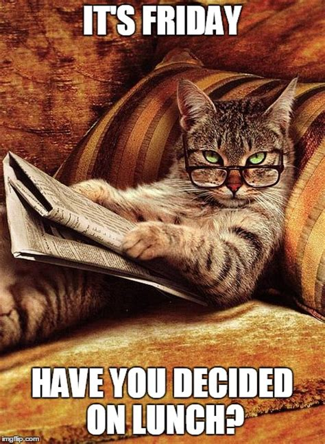 Friday Cat Meme - cat reading imgflip