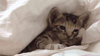 i m in bed world cat day gifs august 8 2014 pawnation