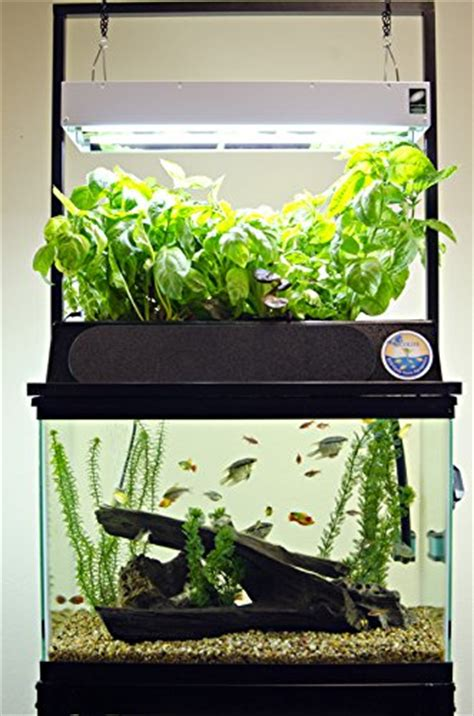 cleaning fish tank    detailed guide