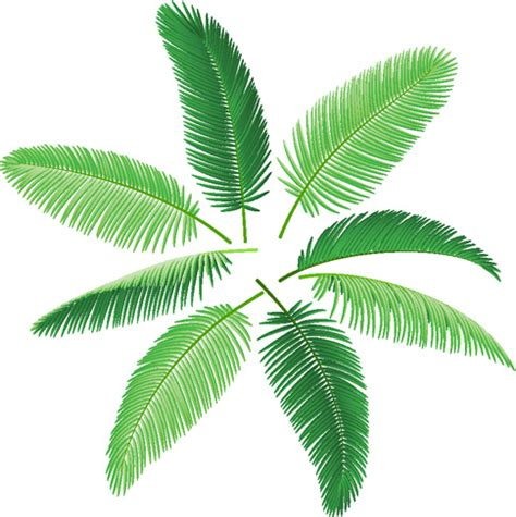 leaf pattern cdr set of green palm leaves vector free vector in