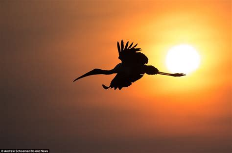 il gabbiano cing est100 一些攝影 some photos silhouette animal 剪影 動物