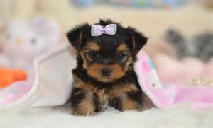 Puppies for free pictures 27 jpg animal pictures