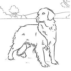 golden retriever coloring pages golden retriever puppy coloring pages coloring pages