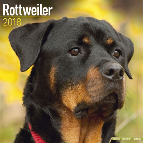 rottweiler inc rottweiler calendar 2018 pet prints inc