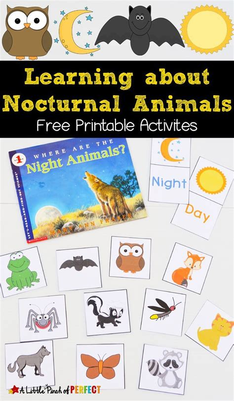 printable nocturnal animal pictures free nocturnal animals printables nocturnal animals