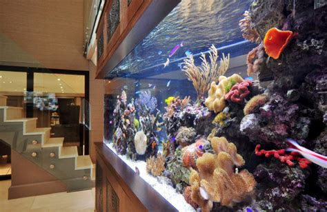 Interior Decorating Ideas For Home Footballers Pad Bespoke Aquarium Ideas By Aquarium
