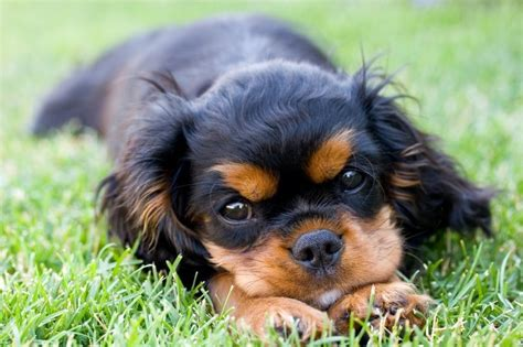 best city dogs 15 best apartment dogs for you city dwellers