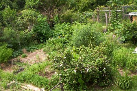 backyard permaculture australia what is permaculture ecoliving design