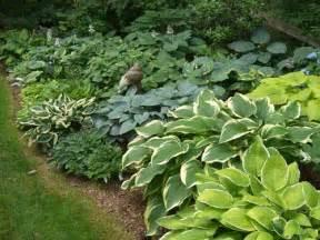Hosta Garden Ideas Hostas City Garden Ideas
