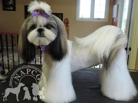 shih tzu grooming needs japanese style groom shaggy tails pet salon