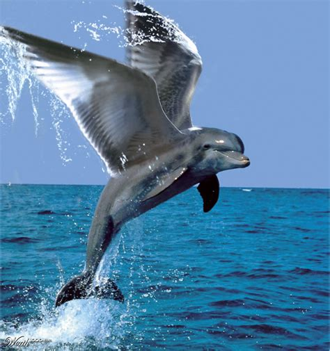 flying dolphin worth1000 contests