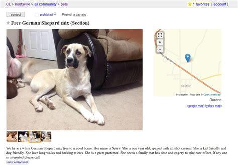 buying a puppy on craigslist craigslist ads buyer beware puppy leaks