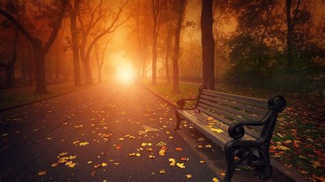 nature autumn bench sunlight wallpaper