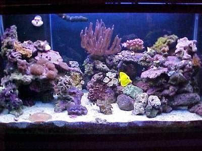 live rock aquascape designs 1000 images about saltwater fish tank on pinterest fish