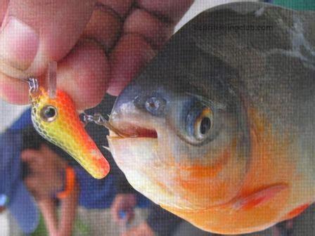 Joran Pancing Bawal Tips Dan Trik Mancing Ikan Bawal Kepri Fishing Club