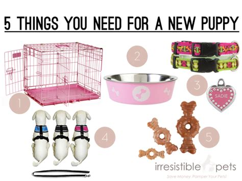 what you need for a puppy five things you need for a new puppy irresistible pets