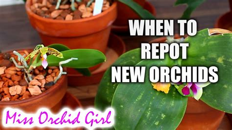 do we repot new orchids even if in bloom when youtube