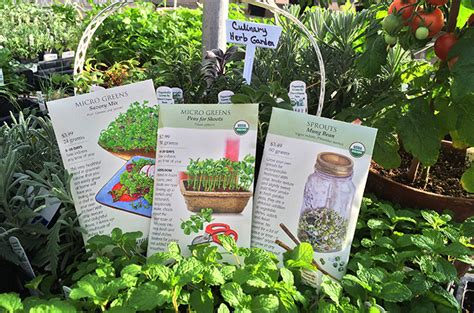 Tagawa Gardens Coupons by 5 Easy Seed Starting Tips To Help You Grow Seeds Like A