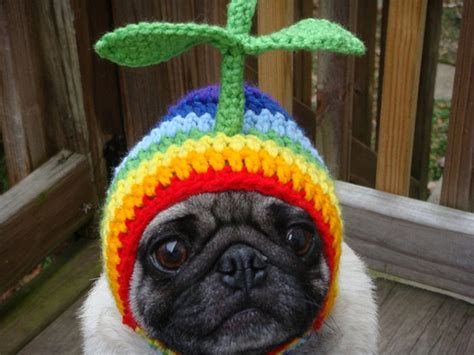 pugs hats sad pug is the model for these silly hats 16 pics pleated