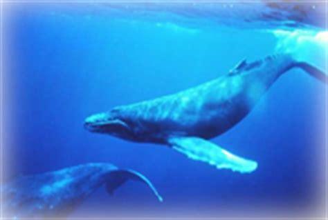 wie schlafen wale wale und delfine