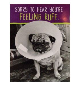 get well pug pug get well soon card at www ilovepugs co uk post worldwide pugs