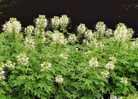 easy plants to grow cheap hardy plants