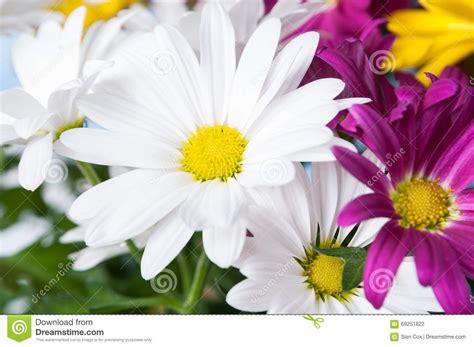 imagenes de rosas alegres flores alegres foto de archivo imagen 69251822