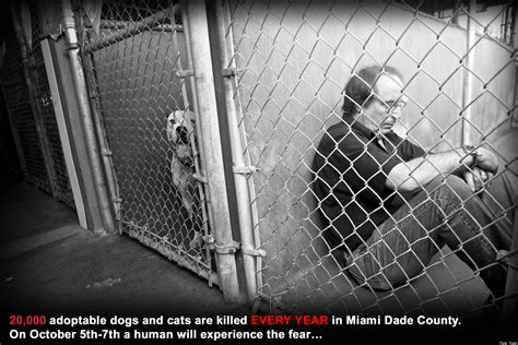 adopt a puppy miami miami animal adoption michael rosenberg to sit in cages for two days photos