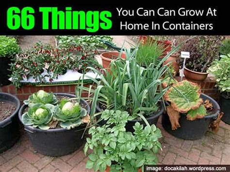 grow  home  containers
