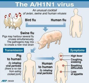 swing flu medical journal online swine flu causes symptoms and