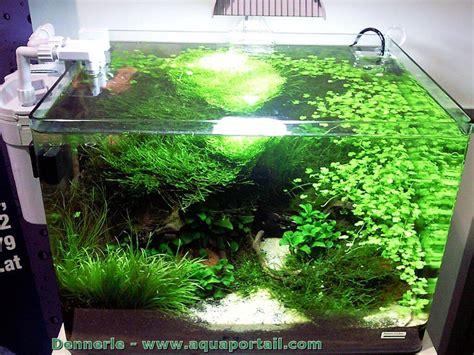 aquarium aquascaping scaper s tank dennerle aquarium aquascaping forum plantes