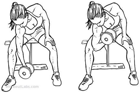 seated dumbbell curl seated dumbbell concentration curls workoutlabs