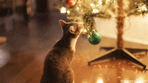 christmas animals animated cat animated gif